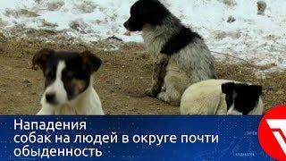 Нападения собак на людей в АГО почти обыденность