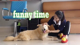 FUNNY DOG 2019 - PREPARE YOURSELF TO CRY WITH LAUGHTER!