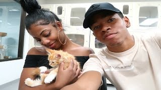 WE'RE GETTING A NEW KITTEN!!?