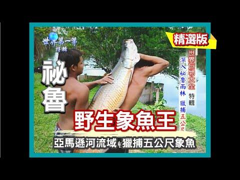 【祕魯】深入祕魯雨林 獵捕 5 公尺象魚|《世界第一等》314集小馬精華版
