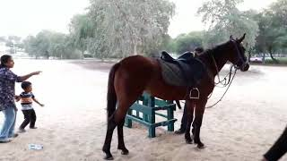 3 year old boy riding horce