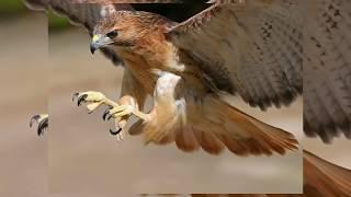 Las 7 Aves Carnívoras mas peligrosas del mundo
