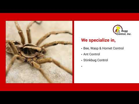 Residential and Commercial Pest Control in Buffalo NY