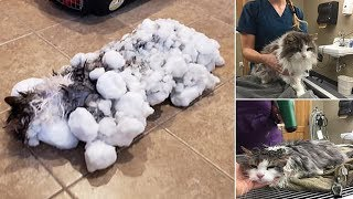 Veterinarians bring nearly frozen, unresponsive cat back to life