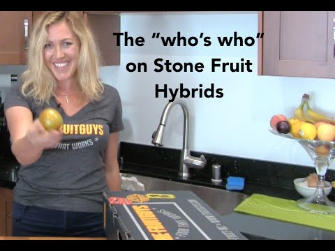 """The """"Who's Who"""" on Stone Fruit Hybrids - The FruitGuys"""