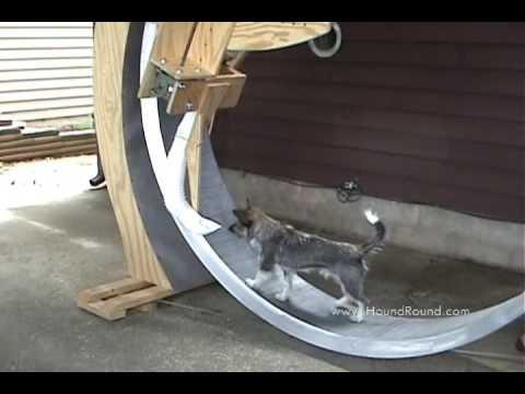 Dog Treat Dispenser >> Giant Dog Exercise Wheel with Kibble Dispenser - YouTube