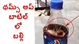 Dead Lizard Found in Thums Up Bottle in Sri Rangapur : Wa..