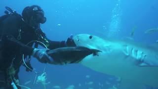 サメの頭をなでる