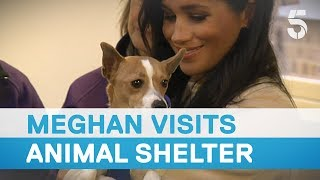 Meghan Markle called 'fat lady' as she visits Mayhew animal shelter - 5 News