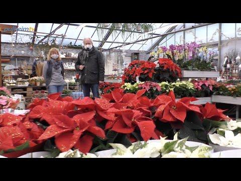 Weihnachtsdekoration bei Blumen Boon.