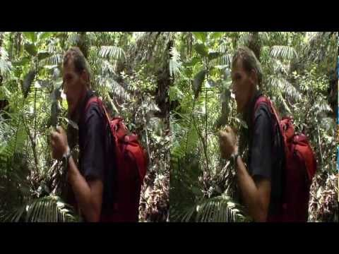 3net - Madagascar: The Lost Makay Preview 3D Video