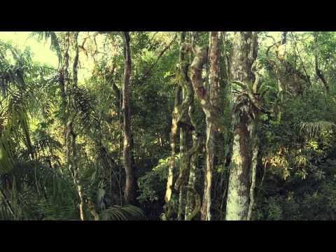 ONU-REDD en Panamá destaca los avances de su inventario nacional forestal
