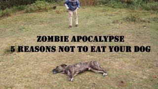 Zombie Apocalypse Dog Defense