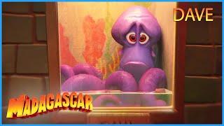 DreamWorks Madagascar | Dave's Story | Penguins of Madagascar Clip   Kids Movies