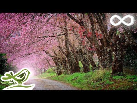 Relaxing Piano Music: Romantic Beautiful Music, Relaxation Music, Sleep Music, Relaxing Music ★92