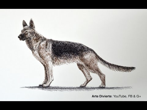 Dibujos de perros :perro Pastor Alemán - Dibujos para Pintar ...