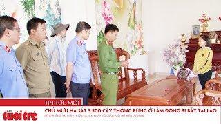 Chủ mưu hạ sát 3.500 cây thông rừng ở Lâm Đồng bị bắt tại Lào