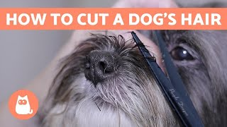 How to Cut a Dog's Hair? 🐶 BASIC GROOMING Tutorial