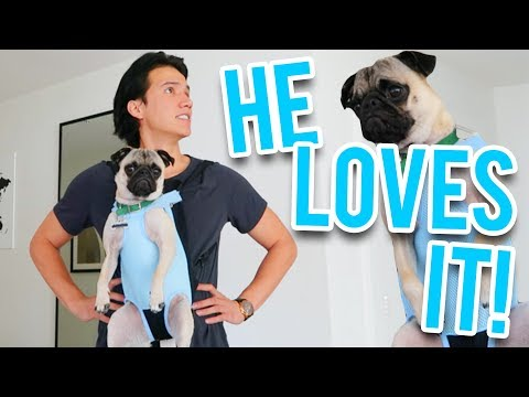 TURNED MY PUG INTO A BABY!!
