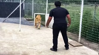 This Lion Has Spent 7 Years Without Seeing Its Master