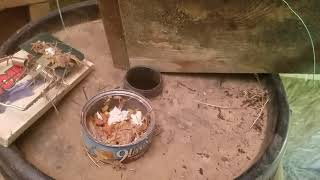 Best Rat trap can be used for most small animals