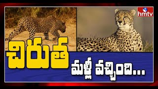 Leopard creating panic once again in Hyderabad..