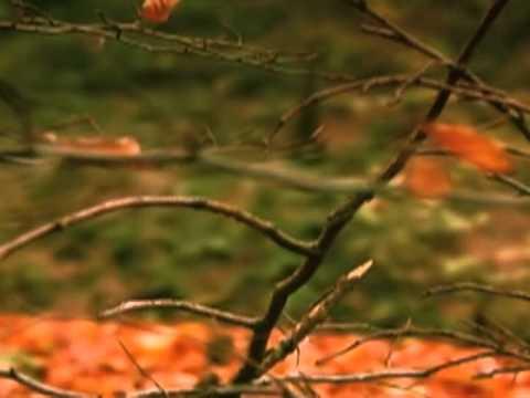 Couple - Осень