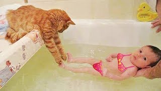 MOST Crazy Cats Annoying Babies, Funny Cats Compilation Videos