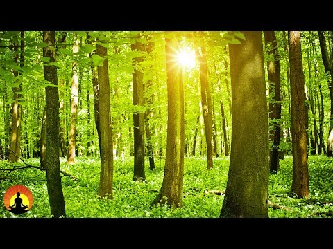 Healing Meditation Music, Relaxing Music, Music for Stress Relief, Peaceful Music, Calm Music, ☯3458