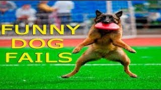 Top Five funniest dog fails **very funny**