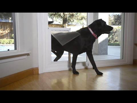Anlin Freedom+ In-Glass Pet Door