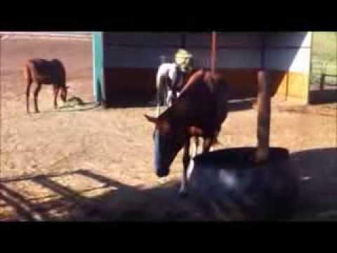 Feeding horses breakfast