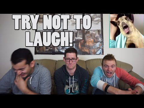 Try Not To Laugh [CHALLENGE]
