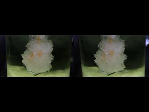 Growing Alumcrystals timelapse real-3D stereoscopic Alaunkristalle wachsen HD