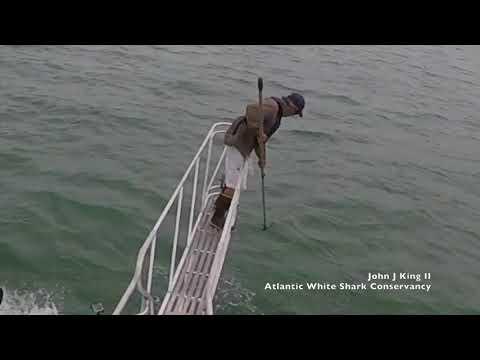 Tubarão ataca biólogo em alto-mar durante pesquisa; Assista ao vídeo!