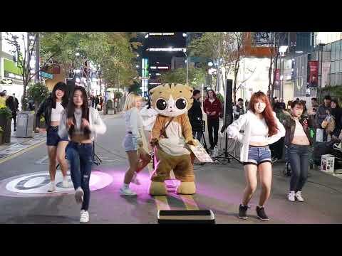JHKTV]신촌  sin chon special cat k pop dance (명물고양이)  up & down ( 위 아래)