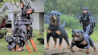 15 Ultimate Military And Police Dog Breeds in the World