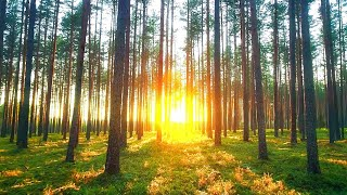 Beautiful Relaxing Music: Peaceful Piano Music. Music for Stress Relief