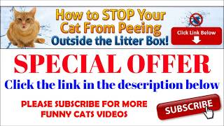 Super Funny Cats Videos Compilation 268 | देखोगे तो पेट भरकर हसोगे |Talking tom funny Cat videos |