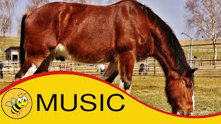 Relaxing Guitar Music - Guitar Music Instrumental Acoustic Short Length