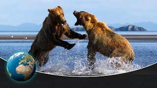 Fighting Grizzlies & Hunting Wolf Packs in America's first National Park - Yellowstone