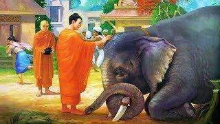 Đêm Trằn Trọc Khó Ngủ - Nghe Phật Kể Truyện Đêm Khuya Cực Hay