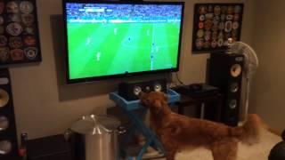 Cachorro adora ver jogo de futebol