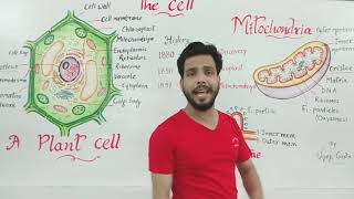 Mitochondria in English(cell structure and function)