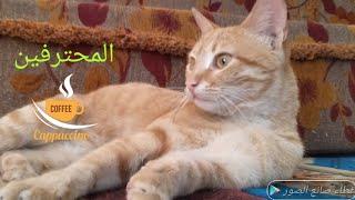 Funny Cats | Crazy Cats