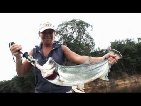 The Blackwater Explorer - Amazon Peaock Bass Fishing