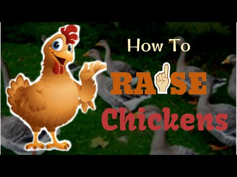How To Raise Healthy Chickens