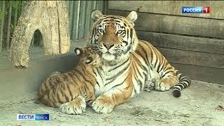Последние жаркие дни стали настоящим испытанием для животных в Большереченском зоопарке
