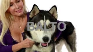 Adopt Balto at NKLA