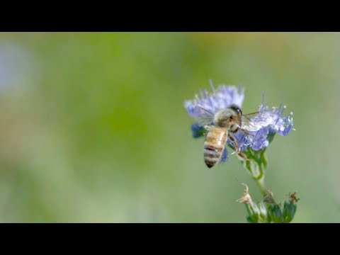 How an almond orchard solved its need for bees